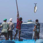 Nachhaltige Fischerei: Ein Bild von einem Fisch. Bonito, der gerade aus dem Meer gezogen wird