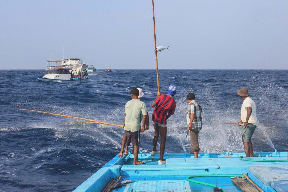 Nachhaltiges Fischen