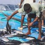 Nachhaltiger Fisch: Kein Beifang, dies ist eine der Voraussetzungen für das blaue Umweltsiegel
