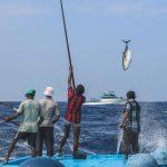 Nachhaltiger Fischfang: Ein Bild von einem Fisch. Bonito, der gerade aus dem Meer gezogen wird