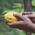 Fairer Handel – Produkte von Kleinbauern