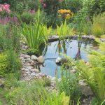 Teich-Biotop, Gartenteich