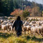 Schäferin Kerstin mit ihren Schafen auf der Weide