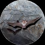 Tiere in der Falkensteiner Höhle