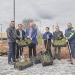 """Beim Projekt """"Lebendiger Weinberg"""" werden Pflanzpakete verteilt"""