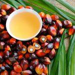 Palmöl flüssig und in den Kernen