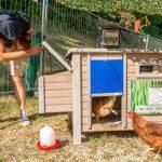 Das Hühnerhäuschen der Hühnervermietung Hahn