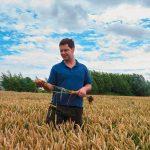 Der Landwirt prüft sein Getreide