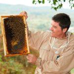 Der Imker prüft die Wabe der Bienen
