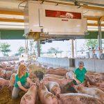 Kinder sitzen bei Schweinen im Stroh