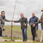 Der Ortenauer Weinkeller und seine Vertragswinzer führen die sechste Pflanzaktion durch