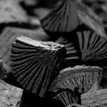Holzkohle aus heimischen Buchen ist nachhaltig.