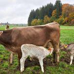 Ständiger Zugang zur Muttermilch