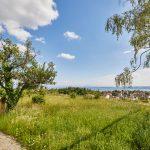 Blühwiese mit Panoramablick auf den Bodensee bei Meersburg