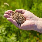 Bestes Saatgut für die Bienenweide: Samen von gebietseigenen Wildblumen und Wildgräsern aus gesicherten Herkünften Deutschlands